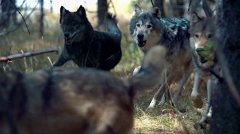 Blue Buffalo BLUE Wilderness TV Spot, 'Wolf Pack' - Thumbnail 1