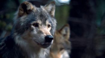 Blue Buffalo BLUE Wilderness TV Spot, 'Wolf Pack' - Thumbnail 2