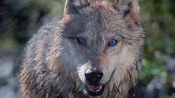 Blue Buffalo BLUE Wilderness TV Spot, 'Wolf Pack' - Thumbnail 6
