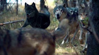 Blue Buffalo BLUE Wilderness TV Spot, 'Wolf Pack' - 4044 commercial airings