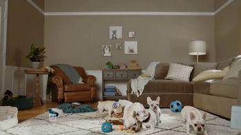 Do I Have Prediabetes TV Spot, 'Prediabetes Risk Test: Puppies' - Thumbnail 1