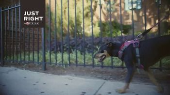 Just Right by Purina TV Spot, 'Tailored Nutrition for Your Dog' - Thumbnail 1