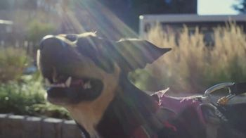 Just Right by Purina TV Spot, 'Tailored Nutrition for Your Dog'