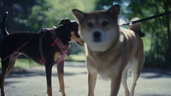 Just Right by Purina TV Spot, 'Tailored Nutrition for Your Dog' - Thumbnail 8