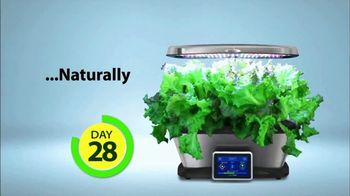 Miracle-Gro AeroGarden TV Spot, 'Plant to Plate' - Thumbnail 6