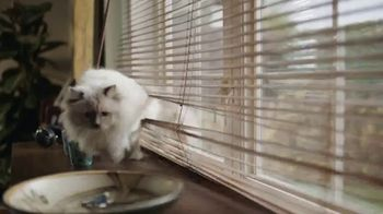 Swiffer TV Spot, 'Cat Hair Gets Everywhere' - Thumbnail 3