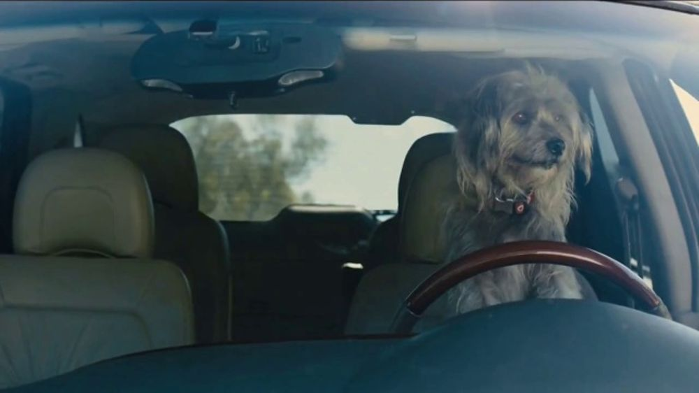 Farmers Insurance TV Commercial, 'Chauffeur Terrier' Featuring Rickie Fowler