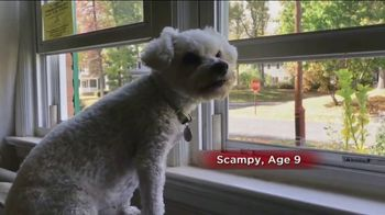Pet Pain Away TV Spot, 'Safe Homeopathic Treatment'