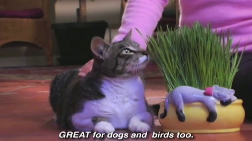 chia cat grass planter tv commercial   u0026 39 perfect gift for