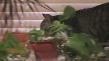 Chia Cat Grass Planter TV Spot, 'Perfect Gift for Cat Lovers' - Thumbnail 3