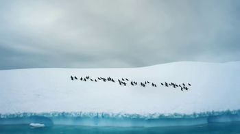 GEICO TV Spot, 'The Great Penguin Migration' - Thumbnail 1
