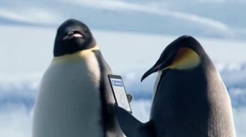 GEICO TV Spot, 'The Great Penguin Migration' - Thumbnail 5