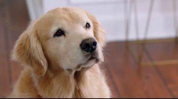 Wag! TV Spot, 'On-Demand Dog-Walking' Featuring Olivia Munn