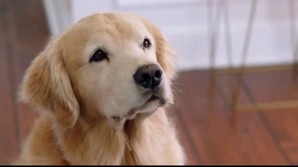 Wag! TV Commercial, 'On-Demand Dog-Walking' Featuring