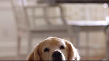 Wag! TV Spot, 'On-Demand Dog-Walking' Featuring Olivia Munn - Thumbnail 6