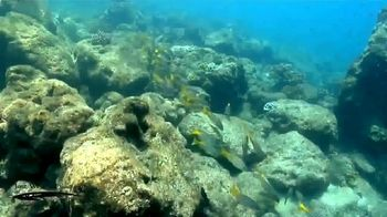 Jose Wejebe Spanish Fly Memorial Foundation TV Spot, 'Gift of Fishing' - Thumbnail 3