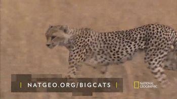 National Geographic TV Spot, 'Big Cats: Cheetah' Featuring Filipe DeAndrade - Thumbnail 6