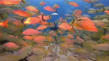 The Florida Keys & Key West TV Spot, 'Diving: National Marine Sanctuary' - Thumbnail 1