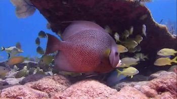 The Florida Keys & Key West TV Spot, 'Diving: National Marine Sanctuary' - Thumbnail 2