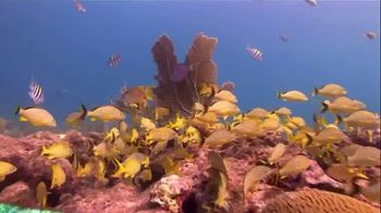 The Florida Keys & Key West TV Spot, 'Diving: National Marine Sanctuary' - Thumbnail 3
