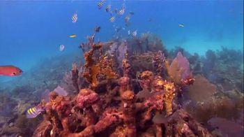 The Florida Keys & Key West TV Spot, 'Diving: National Marine Sanctuary' - Thumbnail 6