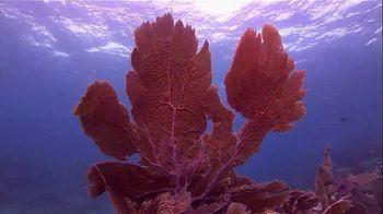 The Florida Keys & Key West TV Spot, 'Diving: National Marine Sanctuary' - Thumbnail 8