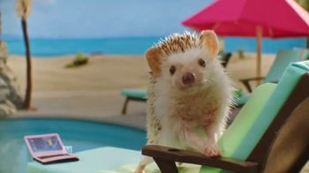 Hedgehogs on Vacation thumbnail