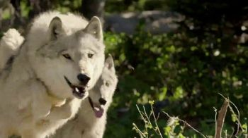 Blue Buffalo BLUE Wilderness TV Spot, 'Puppy Spirit' - Thumbnail 3