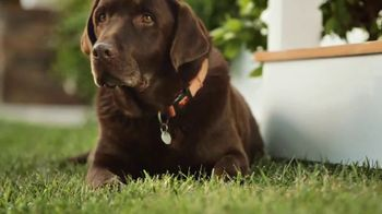 Simply Orange TV Spot, 'Fetch With Man's Best Friend' - Thumbnail 7