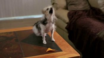 Doritos TV Spot, 'Fetch' - Thumbnail 4