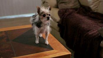 Doritos TV Spot, 'Fetch' - Thumbnail 5