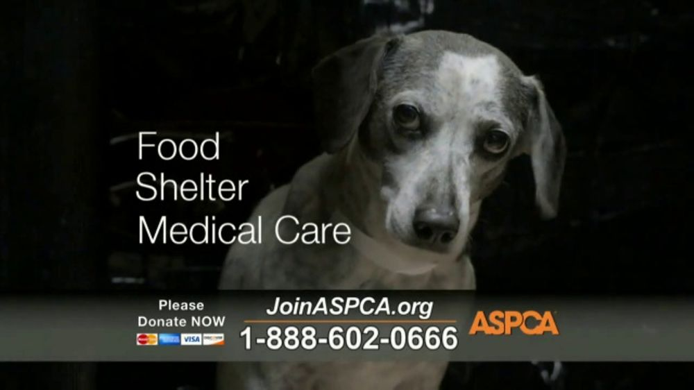 ASPCA TV Commercial, 'Trapped With No Protection'