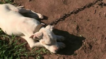 ASPCA TV Spot, 'Trapped With No Protection'