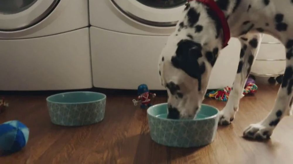Culligan TV Commercial, 'If Dogs Could'