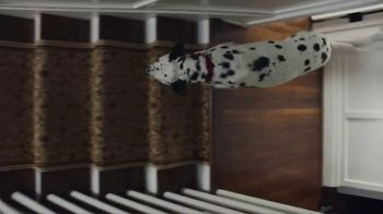 Culligan TV Spot, 'If Dogs Could' - Thumbnail 1