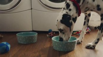 Culligan TV Spot, 'If Dogs Could'