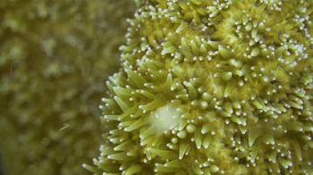 Atlantis TV Spot, 'Coral Reef Conservation' - Thumbnail 8