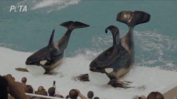 PETA TV Spot, 'SeaWorld'