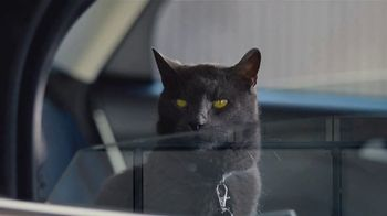Ford Focus TV Spot, 'Cats and Dogs' Song by Link Wray & His Ray Men [T1]