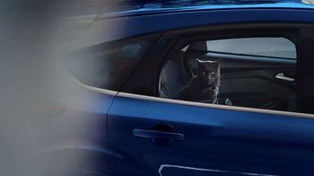Ford Focus TV Spot, 'Cats and Dogs' Song by Link Wray & His Ray Men [T1] - Thumbnail 6