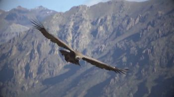 Visit Peru TV Spot, 'Pathway Thru Peru' - Thumbnail 8