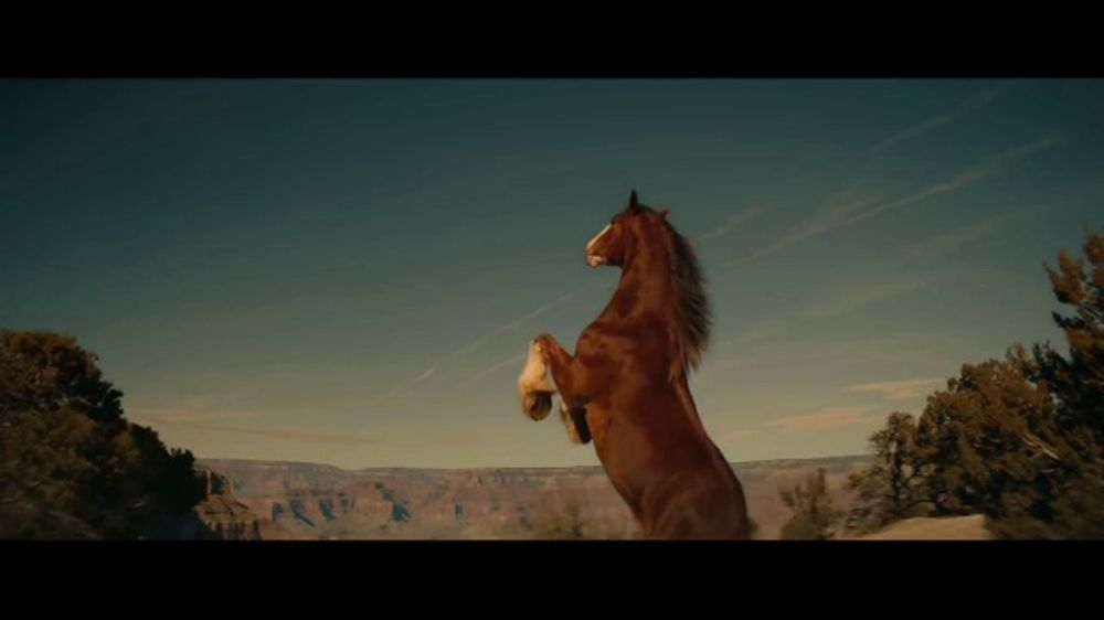 Budweiser tv commercial beer country ispot aloadofball Choice Image