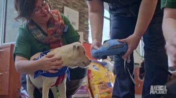 Subaru TV Spot, 'Animal Planet: Citizens for Animal Protection' [T1] - Thumbnail 6