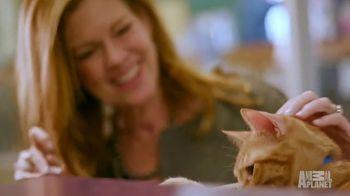 Subaru TV Spot, 'Animal Planet: Citizens for Animal Protection' [T1] - Thumbnail 8