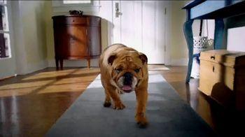 Blue Buffalo Blue Basics TV Spot, 'Rocky the Bulldog' - Thumbnail 1