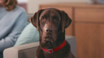 Purina Beneful Break-N-Bites TV Spot, 'You Gotta Get Cute' - Thumbnail 6