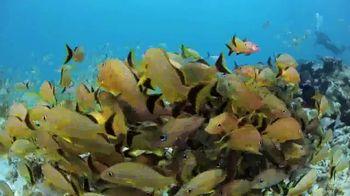 Citizen Promaster 200M Dive TV Spot, 'Dive Deeper' - Thumbnail 5