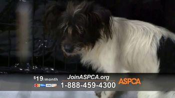 ASPCA TV Spot, 'Natural Disaster Rescue' - Thumbnail 5