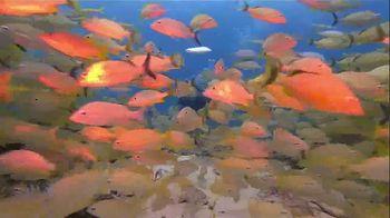 The Florida Keys & Key West TV Spot, 'Diving' - Thumbnail 1