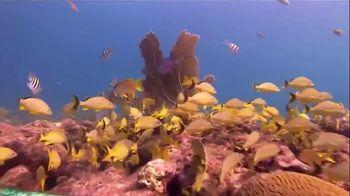 The Florida Keys & Key West TV Spot, 'Diving'